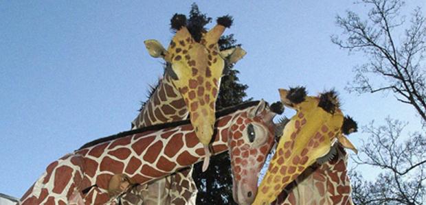 White Summer - Girafes
