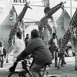 Girafes (Xirriquiteula Teatre) - Foto 4  baixa