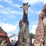 Girafes (Xirriquiteula Teatre) - Foto 8 baixa