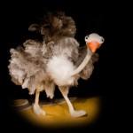Animals animats (Marionetarium) - Foto 7